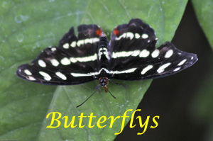 Butterflys Photo Slide Show