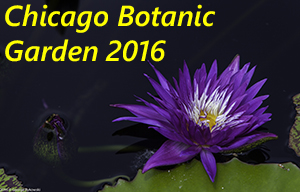 Chicago Botanic Garden 2016 Photo Slide Show
