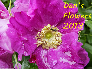 Dan Flowers 2013 Photo Slide Show