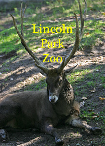 Lincoln Park Zoo Photo Slide Show