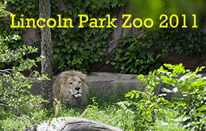 Lincoln Park Zoo 2011 Photo Slide Show