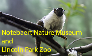 Notebaert Nature Museum and Lincoln Park Zoo 2014 Photo Slide Show