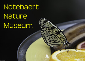 Notebaert Nature Museum Photo Slide Show